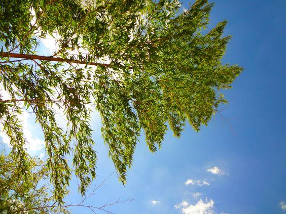 Dicas de Plantas de Sol
