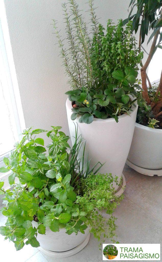 horta em apartamento temperos em vasos