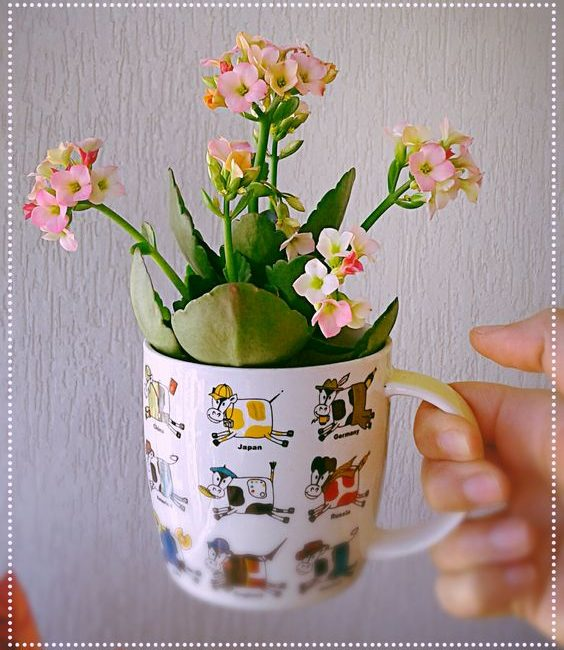 Escolha a Planta Ideal Para Sua Casa