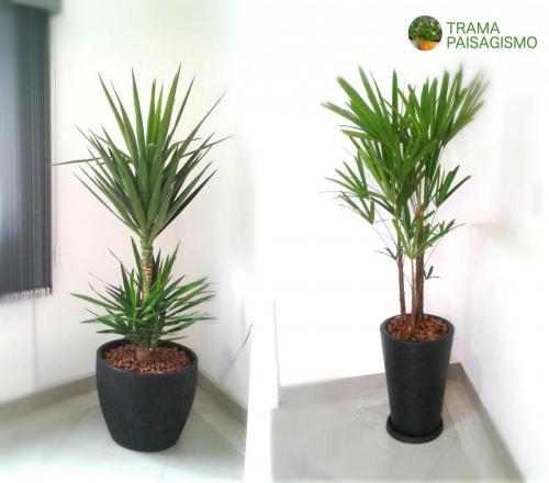 Plantas_escritorio