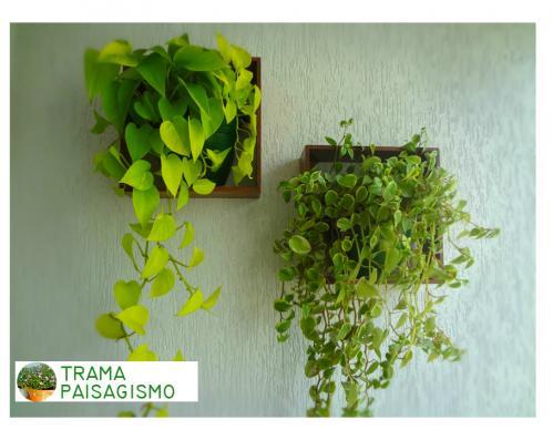 paisagismo_quadrinhos_parede